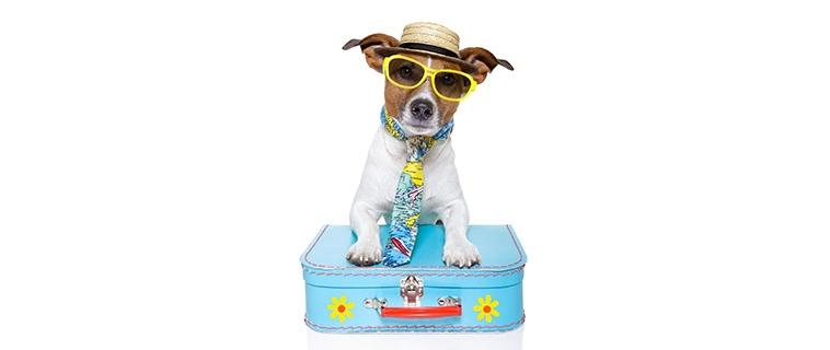 Billie gaat mee op reis!