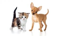 Gevaarlijke keukenprodukten voor hond en kat